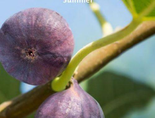 MANNA 80: SUMMER